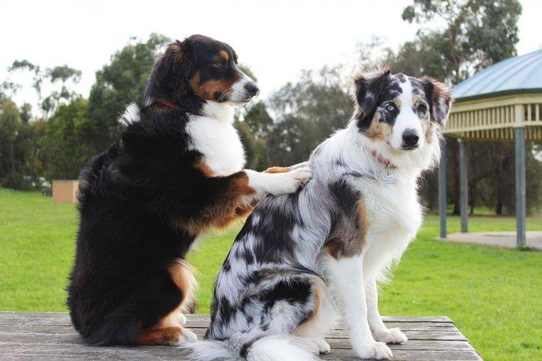 犬に教えたい芸(トリック) かわいい芸から面白い芸まで教え方を紹介