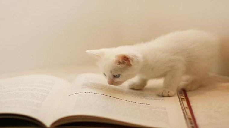 読み方 成 猫